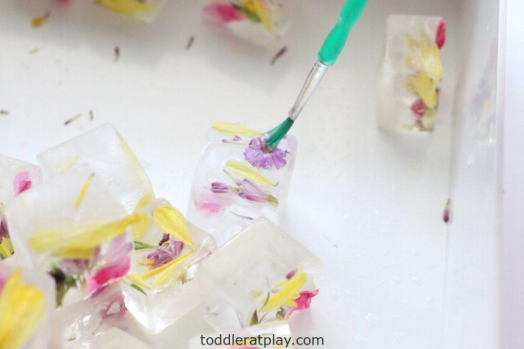 water painting flower ice cubes- toddler at play (16)
