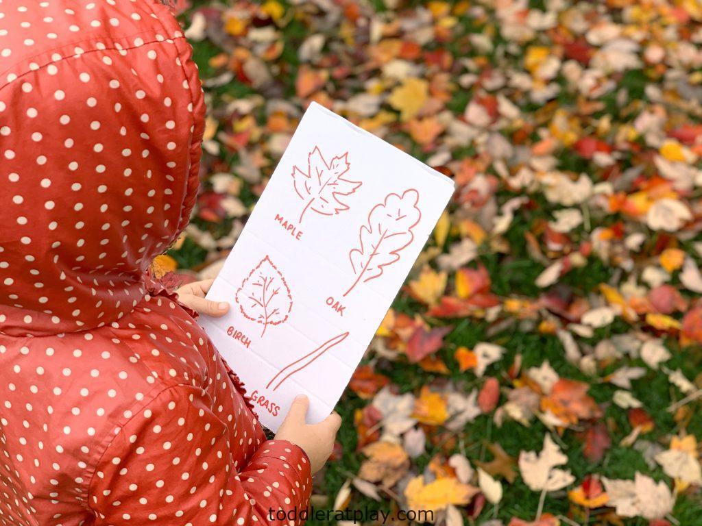 leaf scavenger hunt- toddler at play (12)