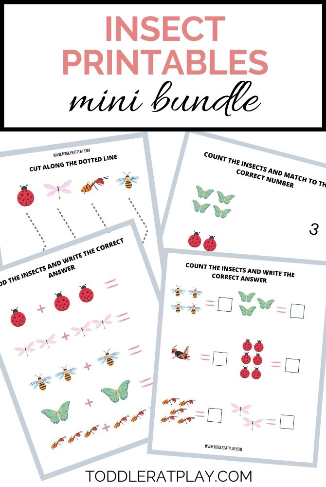 insect mini bundle