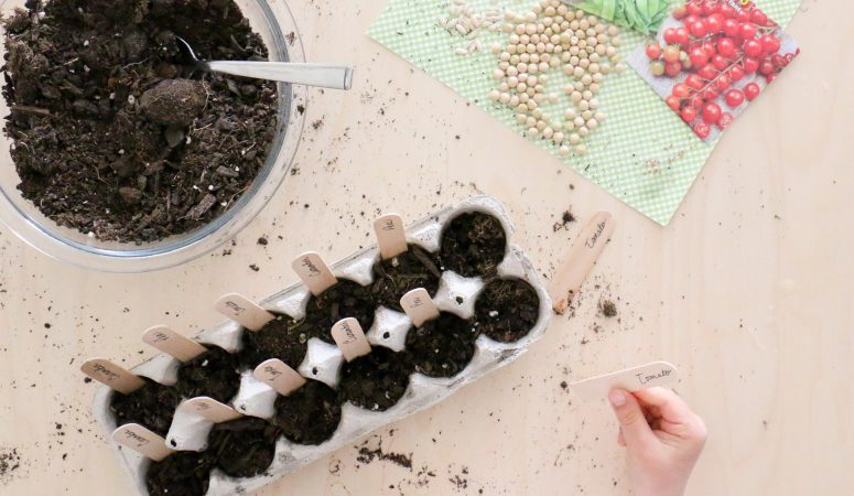 Planting Seeds Activity