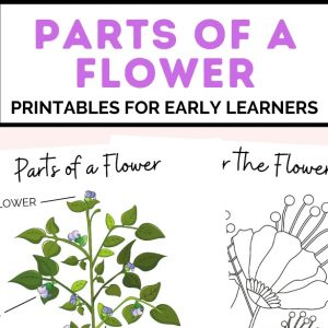 parts of a flower printables for early learners- toddler at play (1)